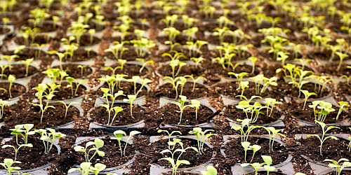 ATR Soft, Customtools, automation, seedlings in pots